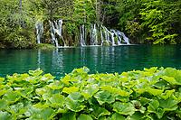 WATERFALS OF BURGET LAKES, Plitvice Lakes NP, Croatia