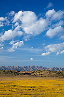Carrizo Plain National Mounment, CA<br /> Evening clouds over the distant hills of the Temblor range with goldfields (Lasthenia spp.) in the foreground