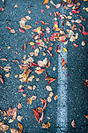 10.11.18 - Leaves Parked....