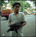 Jakarta, Indonesia. August, 2000.An  eagle  for sale on Jalan Balito, Jakarta bird market. The illegal animal trade has flourished since Suharto resigned from office in 1998 a result of the Asian economic crisis. The eagle ranges in prices from $25 to $50 US dollars.