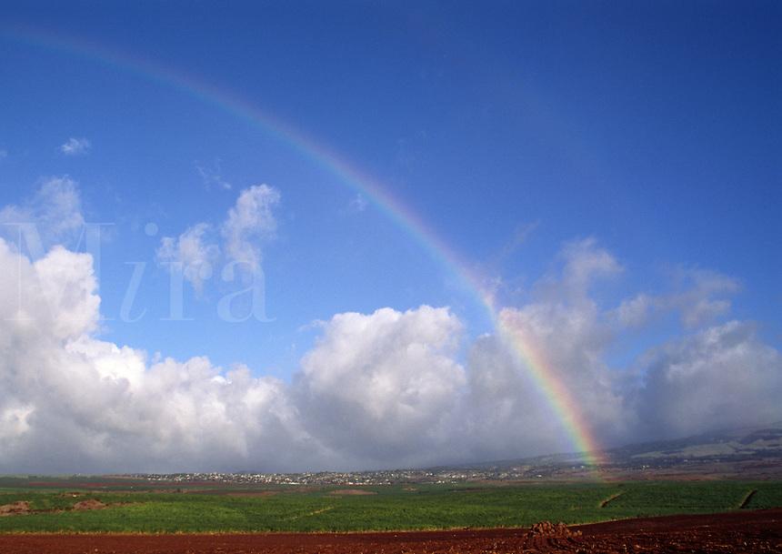 RAINBOW over SUGAR CANE FIELDS - MAUI, HAWAII