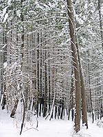 Winter 2003-04