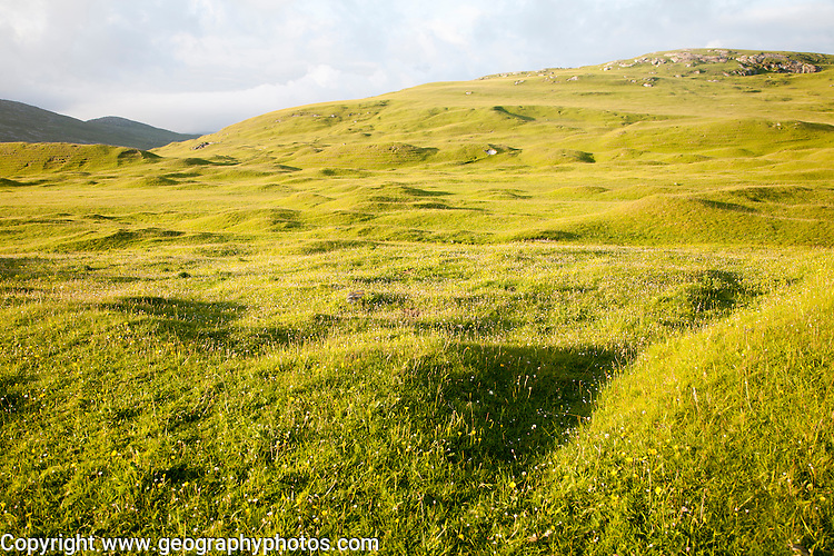 Machair grassland on hillside, Vatersay island, Barra, Outer Hebrides, Scotland, UK