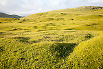 Machair grassland on hillside, Vatersay island, Barra, Outer Hebrides, Scotland, UK