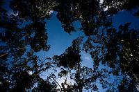 Acaiaca_MG, Brasil...Silhueta de arvores em Acaiaca...Trees silhouette in Acaiaca...Foto: LEO DRUMOND / NITRO.