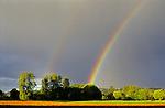 Rainbow striking row of trees
