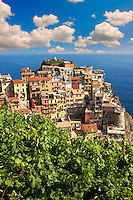 Photo of the fishing port of Manarola, Cinque Terre National Park, Liguria, Italy