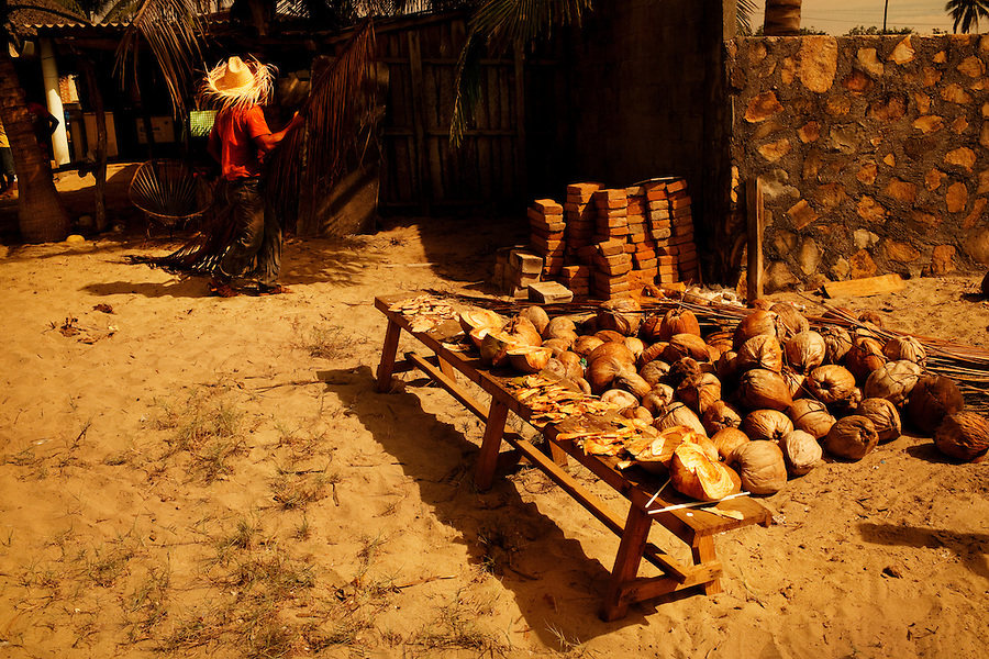Barra Vieja, Mexico, February 16, 2012 &ndash; Juan Carlos Gonzales Segovia, nicknamed &lsquo;Chango Le&oacute;n&rsquo;, uses branches to cover coconuts from the hot sun at Campamento Tortuguera, an organization that works to save the turtles from human predators. Chango Le&oacute;n volunteers his time at the camp in exchange for food and a small stipend. <br /> <br /> The camp has been around since 1999 and survives via donations from the public. In addition to harvesting the baby turtles, it encourages educational opportunities by offering night tours, turtle releases and school tours.