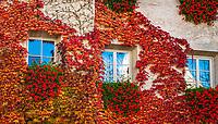 Italien, Suedtirol (Trentino-Alto Adige), Eisacktal, Brixen: Altstadt, Hausfassade mit Weinlaub in Herbstfarben | Italy, South Tyrol (Trentino-Alto Adige), Bressanone: old town, house facade with vine leaves in autumn colours