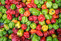 Hot peppers for sale at a grocery store in Richmond Hill in the New York borough of Queens on Thursday, June 25, 2015. The neighborhood of Richmond Hill is a polyglot of ethnic cultures. It is home to Pakistanis, Indians, Guyanese and has a large Sikh population.  (© Richard B. Levine)