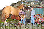 Barradubh Horseshoes   Copyright Kerry's Eye 2008