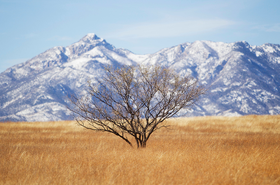 1/2/2011- Snow covered peaks are seen in the high desert near Sonoita, Arizona. (Photo by Pat Shannahan)