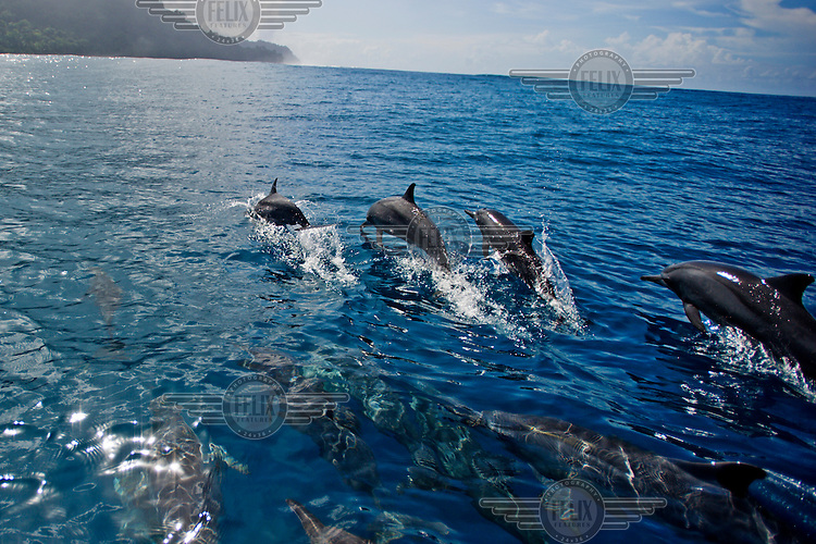 Spinner dolphins jump from the water off the coast of Tetepare.