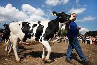 Keuring van een koe tijdens een historische Oogstdag in Ermelo