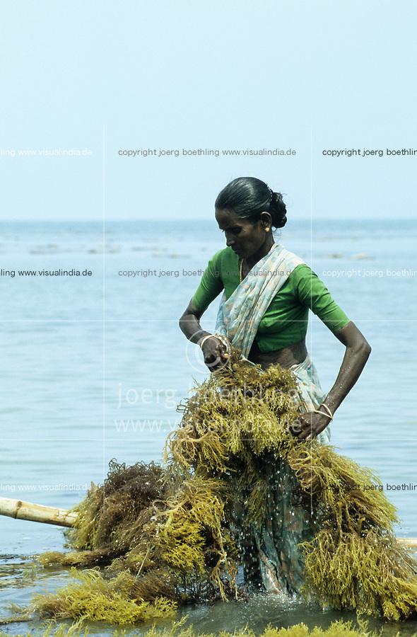 INDIA, Tamil Nadu, Gulf of Mannar <br /> Pepsi Foods Ltd. Farm for seaweed cultivation, algae is used for processing of Agar-agar or Carrageenan as food additional for ice cream, Cola etc. / INDIEN, Tamil Nadu, Golf von Mannar, Pepsi Foods Ltd. Farm ffuer Kultivierung von Rotalgen, aus den Rotalgen werden Agar Agar gewonnen