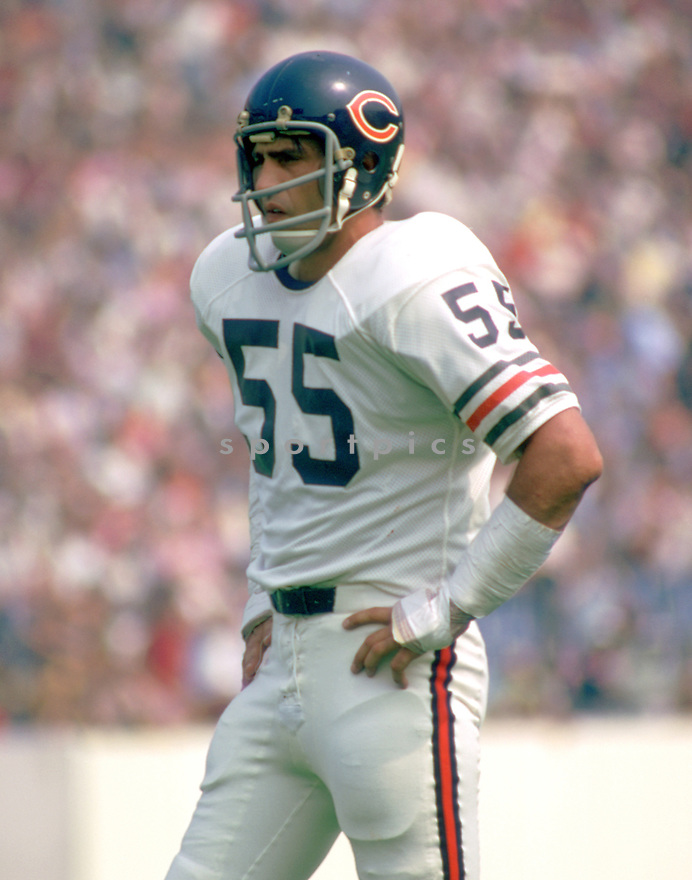 Chicago Bears Doug Buffone (55) during a game from his 1973 season with the Chicago Bears. Doug Buffone played for 14 season, all with the Bears.(SportPics)