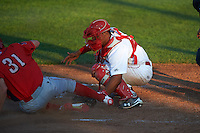 Auburn Doubledays catcher Luis Vilorio (4) tags out David Martinelli (31) sliding home during a game against the Williamsport Crosscutters on June 25, 2016 at Falcon Park in Auburn, New York.  Auburn defeated Williamsport 5-4.  (Mike Janes/Four Seam Images)