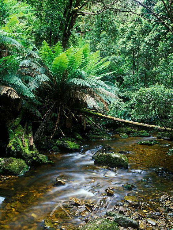 Nelson Creek, Franklin Gordon Wild Rivers NP, Tasmania, Australia