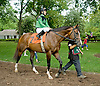 Escort before The Stonewall Farm Ocala Hockessin Stakes at Delaware Park on 7/28/12