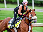 LOUISVILLE, KENTUCKY - MAY 01: Vekoma, trained by George Weaver, exercises in preparation for the Kentucky Derby at Churchill Downs in Louisville, Kentucky on May 1, 2019. John Voorhees/Eclipse Sportswire/CSM