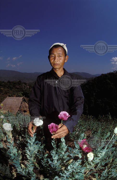 © Marcus Rose / Panos Pictures..Muang Xing, LAOS..Akha chief inspecting his opium crop.