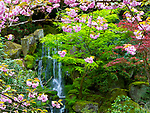 A waterfall named Heavenly Falls is seen through window of Spring cherry blossoms and Japanese Maples as the falls tumbles across moss covered rocks in the Portland Japanese Garden