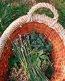FRANCE, Arbois, fresh herbs picked in the Arbois countryside with chef Jean Paul Jeunet, Jura Wine Region