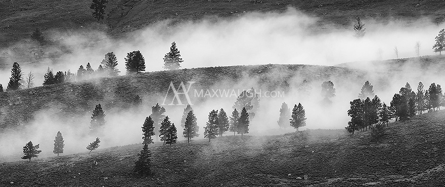 Low-hanging clouds blanket a stand of trees on a distant hillside.