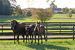 A mare and foals at Bright View Farm in Chesterfield, New Jersey.  Photo By Bill Denver/EQUI-PHOTO.