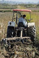 LAOS, rice research NAFRI, experimental farm, ploughing of paddy field where rice seeds will be produced / LAOS Vientiane NAFRI Forschungsinstitut fuer Land- u. Forstwirtschaft, Reis Versuchsfelder und Anbau von Hybrid Reis zur Gewinnung von Saatgut, Pfluegen eines Feldes mit Traktor