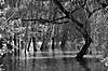 Bäume auf der Jungaue im Hochwasser