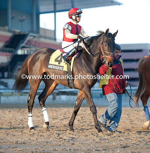Amerigo Vespucci will try to discover the winners circle in the Gotham.