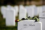 ARLINGTON, VA - NOVEMBER 11: A single rose lays on the headstone of a fallen serviceman on Veteran's Day at Arlington National Cemetery on November 11, 2012 in Arlington, Virginia.