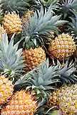 FRENCH POLYNESIA. Raiatea Island. Pineapple harvested at local farm.