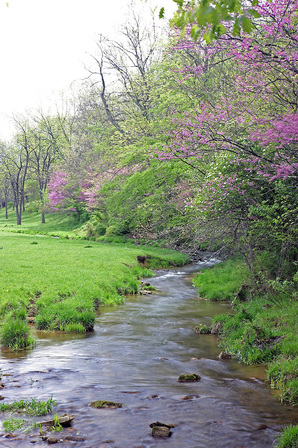 A stream flows past flower spring trees in Albemarle County, Va.