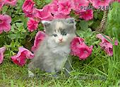 Marek, ANIMALS, REALISTISCHE TIERE, ANIMALES REALISTICOS, cats, photos+++++,PLMP2489,#a#