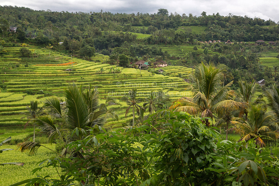 Jatiluwih, Bali, Indonesia.  Terraced Rice Paddies.  Village in the Distance.