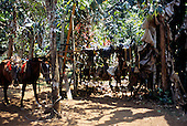 Osa Peninsula, Costa Rica. Lots of saddles slung over a wooden beam; one saddled horse.
