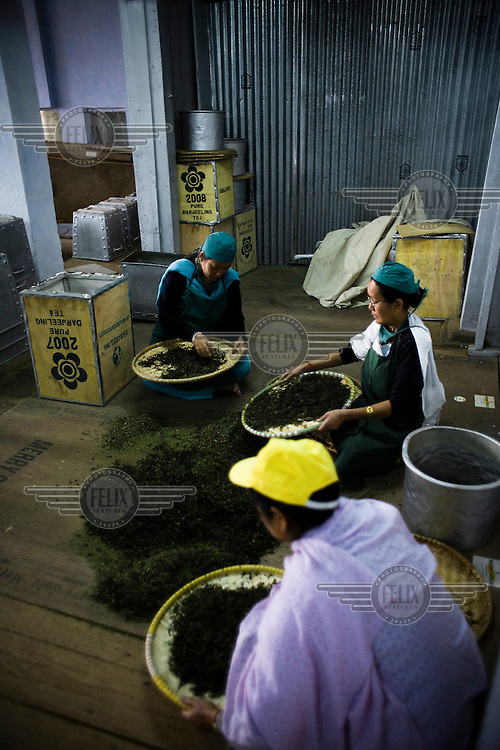 Factory workers sort tea leaves at Makaibari Tea Estate factory in Kurseong, Darjeeling.