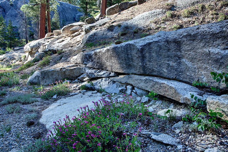 Granite and Forest scenery along the Beasore Road in Sierra NF, California