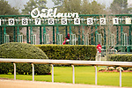 February 17, 2020:  Southwest Stakes at Oaklawn Racing Casino Resort in Hot Springs, Arkansas on February 17, 2020. Ted McClenning//Eclipse Sportswire/CSM