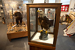 Taxidermied bald eagle and grizzly bear at History Museum in Kalispell, Montana