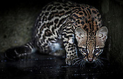 Soltura de Animais Silvestres