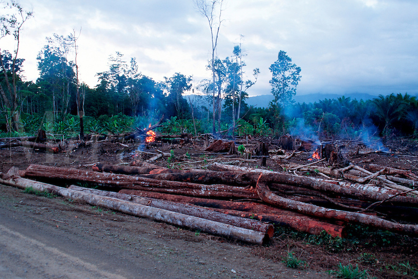 Clear-cutting of tropical hardwoods is one of the threats to coral reefs today . Deforestation leads to erosion and runoff, that covers the coral with silt, Papua New Guinea, Indo-Pacific