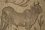 A floor mosaic depicting a bull from Beth Guvrin, Byzantine, 4th century AD,         on display at the Rockefeller Museum