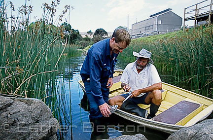 Collecting water samples at INCITEC factory near Wollongong, Port Kembla, ggNew South Wales, testing for green and golden bell frogs biologist Arthur White