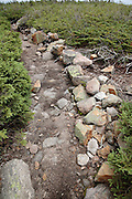 Appalachian Trail - Scree wall along the Twinway Trail near the summit of Mount Guyot during the summer months in the White Mountains, New Hampshire USA. Scree walls are built on the edges of trails to discourage hikers from going off trail. Building these small walls helps protect the fragile alpine habitat.
