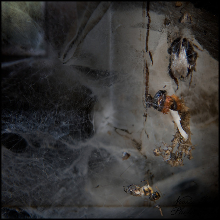 Dead insects caught in spider web