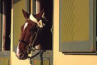 Europe/France/Pays de la Loire/49/Maine-et-Loire/Saumur: Ecole Nationale d'Equitation - Cheval