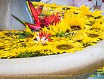 Garden flower basin at Hotel Nacional